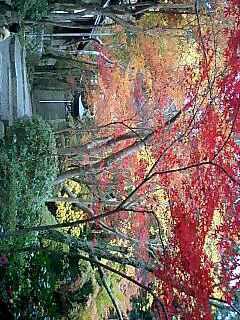 神峯山寺の紅葉