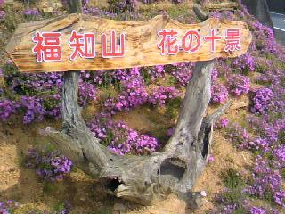 福知山 花の十景 「長尾の芝桜」