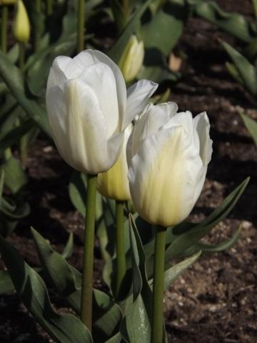 05dscf2365